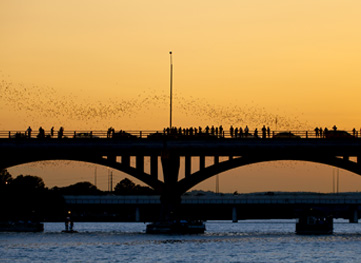 Congress Bridge Bats