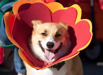 Spring Fling Best Dressed Pet Contest
